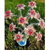 árvore da riqueza – hibiscus vermelho – 12 flores
